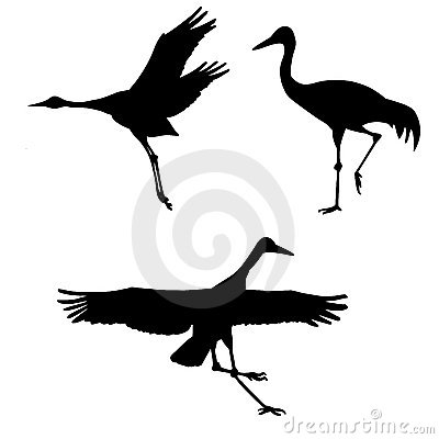 cranes on white background