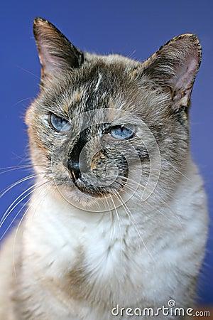 Cranky cat portrait