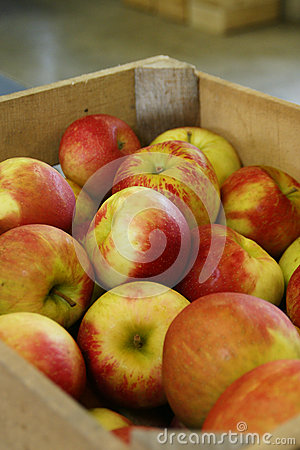 Crate of Cortland Apples