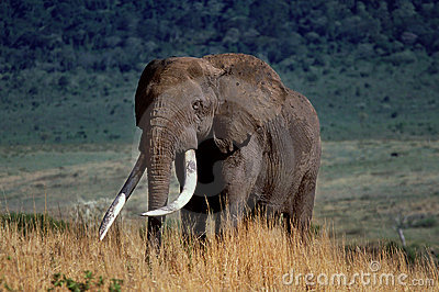 Crater elephant
