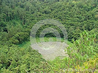 Crater Vegetation