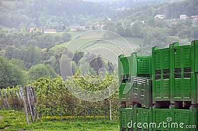 Crates at the Apple Plantation