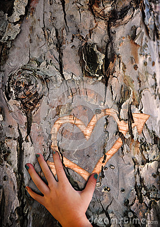 Craving lost love - Carved heart in tree bark