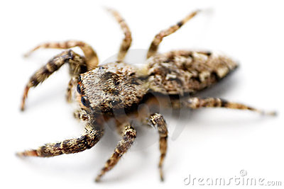 Crawling Spider (Top View)