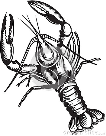 Crayfish. Black and white style Stock Photo