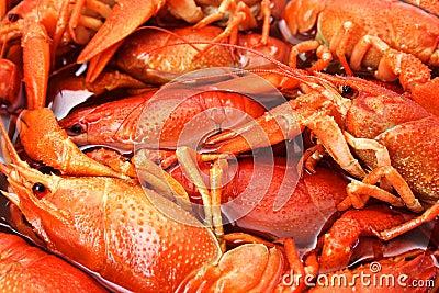 Crayfish closeup