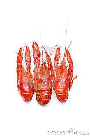 Crayfish trio