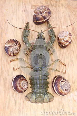 Crayfish on a wood with snails