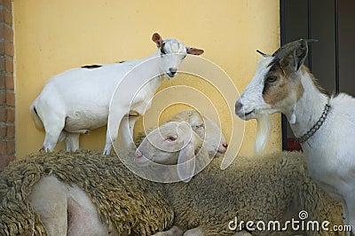 Crazy animals farm family