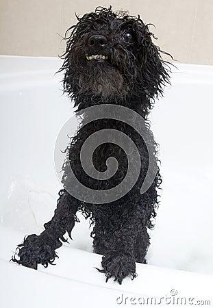 Crazy Dog In Bubble Bath