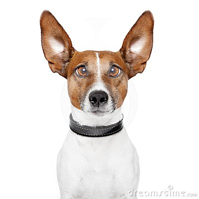 Free Crazy Dog With Big Lazy Eyes Stock Image - 24306831