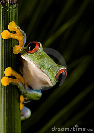 Free Crazy Frog Royalty Free Stock Image - 1940476