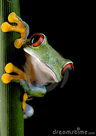Free Crazy Frog Stock Image - 1940481