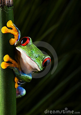 Free Crazy Frog Stock Photos - 1940483