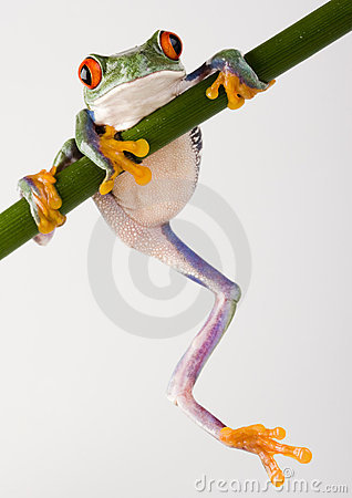 Free Crazy Frog Royalty Free Stock Image - 1940616