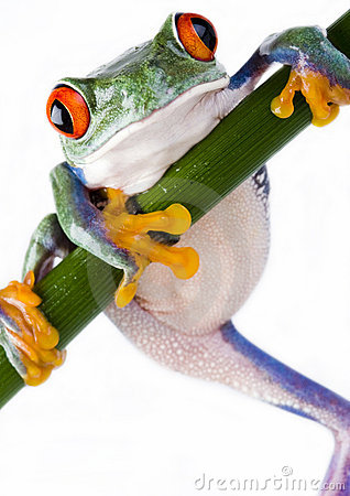 Free Crazy Frog Royalty Free Stock Photography - 1940627