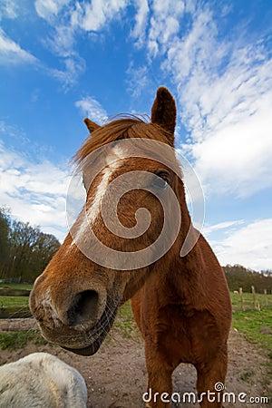 Crazy horse portrait