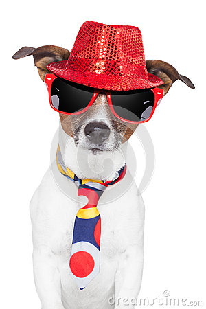 Free Crazy Silly Funny Dog Hat Glasses Tie Stock Image - 27515651