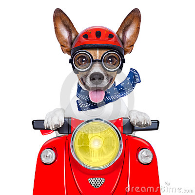 Free Crazy Silly Motorbike Dog Stock Photos - 37050513