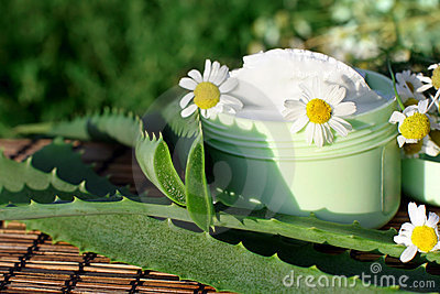 Cream with aloe vera and daisies