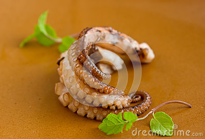 Cream octopus