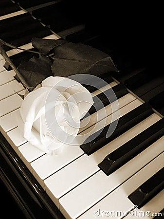Free Cream White Rose On Piano Keys - Sepia Stock Photos - 1103143