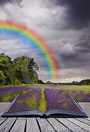 Creative concecpt image of lavender fields