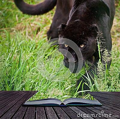 Creative concept image of black jaguar