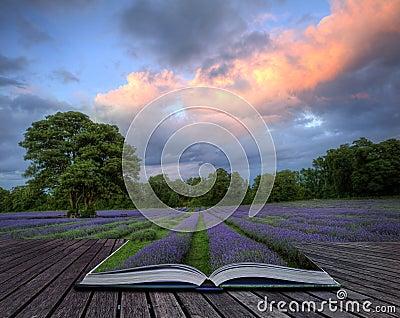 Creative concept image of lavender landscape