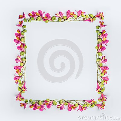 Free Creative Floral Design Frame Layout With Pink And Green Exotic Flowers On White Background Stock Photos - 116533973