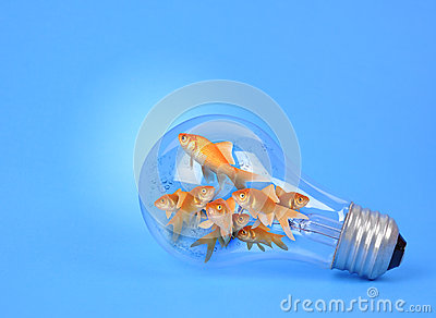 Creative Goldfish in Light Bulb on Blue