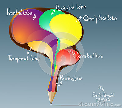 Creative pencil concept of the human bubbles brain