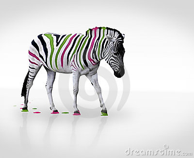 Creative zebra