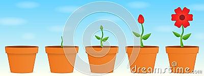 Crecimiento de la flor