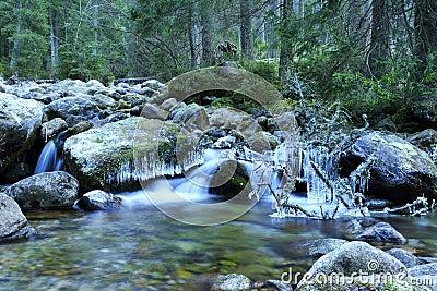 Medodolsky potok, Javorova dolina