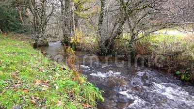 Creek in the autumn forest. Creek in autumn forest with green grass and fallen leaves stock video footage