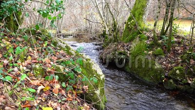 Creek in the autumn forest. Creek in autumn forest between trees, green grass and fallen leaves stock video footage