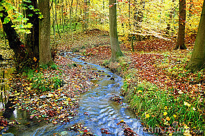 Creek in a fabulous autumnal wood