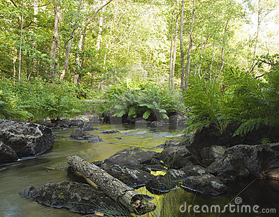 Creek with fern in foreground
