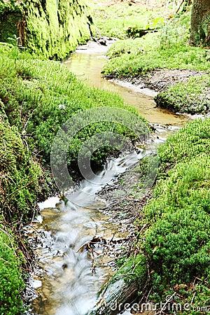 Creek and green shore