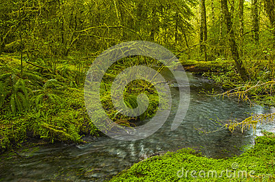 Creek in Hoh Rain Forest Olympic National Park Washington state