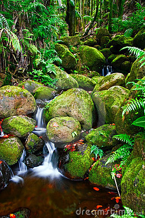 Free Creek In Jungle Of Hawaii Royalty Free Stock Image - 10141636