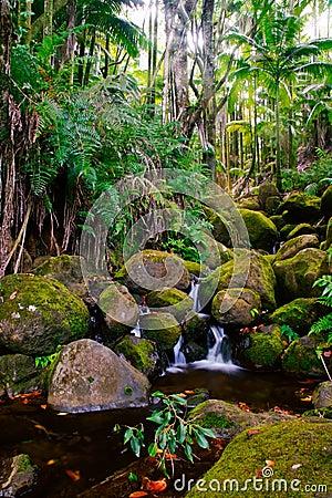 Free Creek In Jungle Of Hawaii Stock Image - 9955561