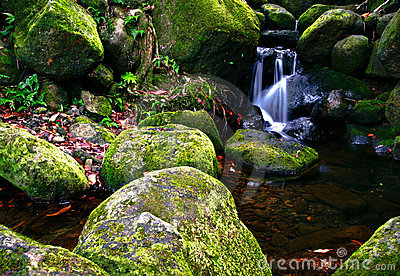 Creek In Jungle Of Hawaii Royalty Free Stock Photo - Image: 12947295