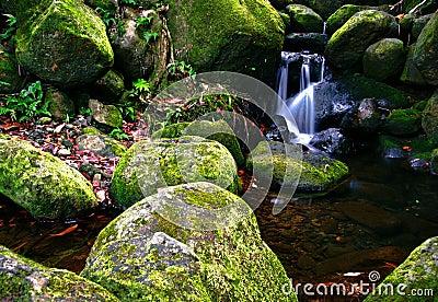 Creek in jungle of Hawaii