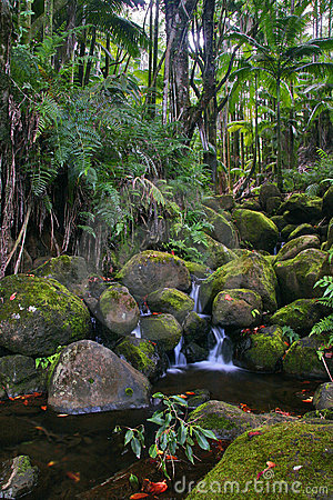 Creek in jungle of Hawaii