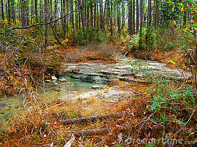 Creek in the Kisatchie Wilderness