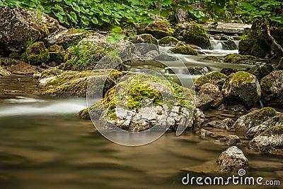 Creek, rocks and vegetation