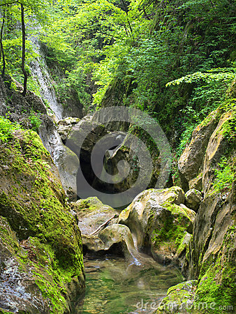 Creek and stones