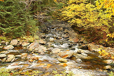 Creek with trees in fall colors